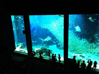 marine-world.jp (3)<br><br>
