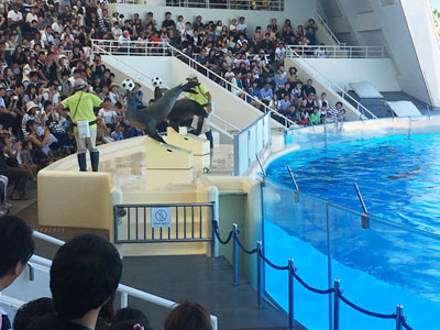 marine-world.jp (5)